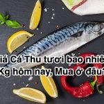 Giá Cá Thu tươi bao nhiêu 1Kg hôm nay 2020, Mua ở đâu?