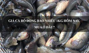 Giá Cá Rô Đồng bao nhiêu 1KG hôm nay 2020, Mua ở đâu?