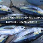 Giá cá ngừ nhỏ, vây xanh vàng đại dương bao nhiêu 1kg 2020, Mua ở đâu?