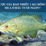 Giá Cá Vược Biển Bao Nhiêu 1 Kg hôm nay 2020? Mua ở đâu tươi ngon?