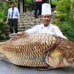 Giá Cá Hô tươi thương phẩm bao nhiêu 1kg 2020, cá hô vàng, đất