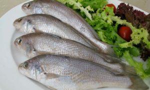Cá Đù giá bao nhiêu tiền 1Kg? Mua, bán cá lù đù ở đâu rẻ nhất 2020?