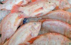 Giá cá Diêu hồng bao nhiêu 1kg 2020? Mua bán ở đâu rẻ?