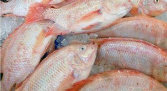 Giá cá Diêu hồng bao nhiêu 1kg 2021? Mua bán ở đâu rẻ?