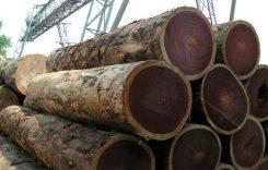 Giá gỗ Lim bao nhiêu 1m3 2021? Gỗ lim lào, việt nam, nam phi