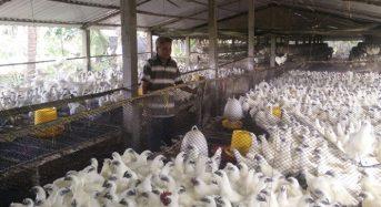 Giá trứng gà ác bao nhiêu 10 quả 2021? Mua ở đâu Thật nhất?