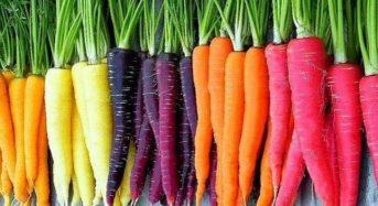 Giá bắp củ cà rốt hôm nay bao nhiêu 1kg 2021? Mua ở đâu rẻ?