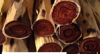 Giá gỗ trắc (đỏ đen xanh, bách diệp, nam phi) bao nhiêu tiền 1kg 2021? Mua ở đâu?