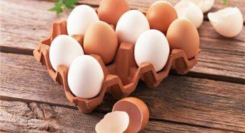 Giá trứng Gà ta, gà công nghiệp bao nhiêu tiền 2021? Mua bán ở đâu rẻ