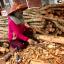 Gỗ Bời Lời là gỗ gì? Tốt không? Giá bao nhiêu 1m3 2021? Mua ở đâu?