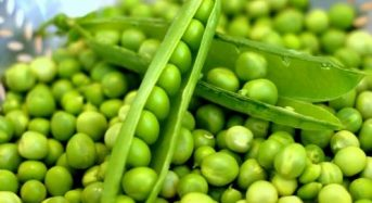 Giá đậu hà lan hôm nay bao nhiêu 1kg 2021? Mua ở đâu rẻ?