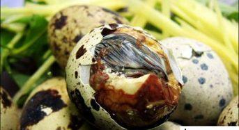 Giá trứng cút lộn bao nhiêu tiền 2021? Mua bán ở đâu rẻ
