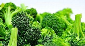 Giá bông cải xanh hôm nay bao nhiêu 1kg 2021? Mua ở đâu giá rẻ?