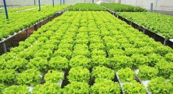 Top 5 Trang trại trồng Rau sạch lớn nhất Việt Nam 2021