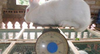 Tổng hợp địa chỉ thu thỏ thịt, thương phẩm tại TpHCM giá rẻ 2021